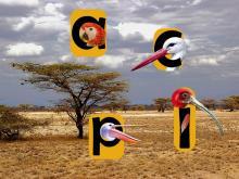 Oiseaux d'Afrique