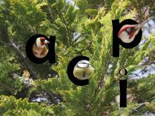 Oiseaux des jardins 1
