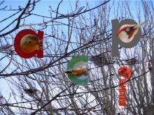 Oiseaux des jardins 2
